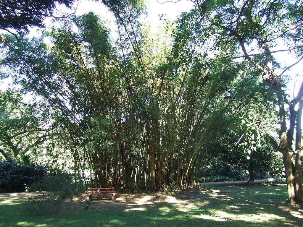 The Gardens boast a palm walk © Robert Cutts/ Flicker