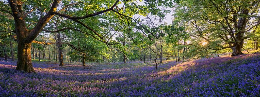 Bluebell Wood, The Trossachs | © John Mcsporran/Flickr