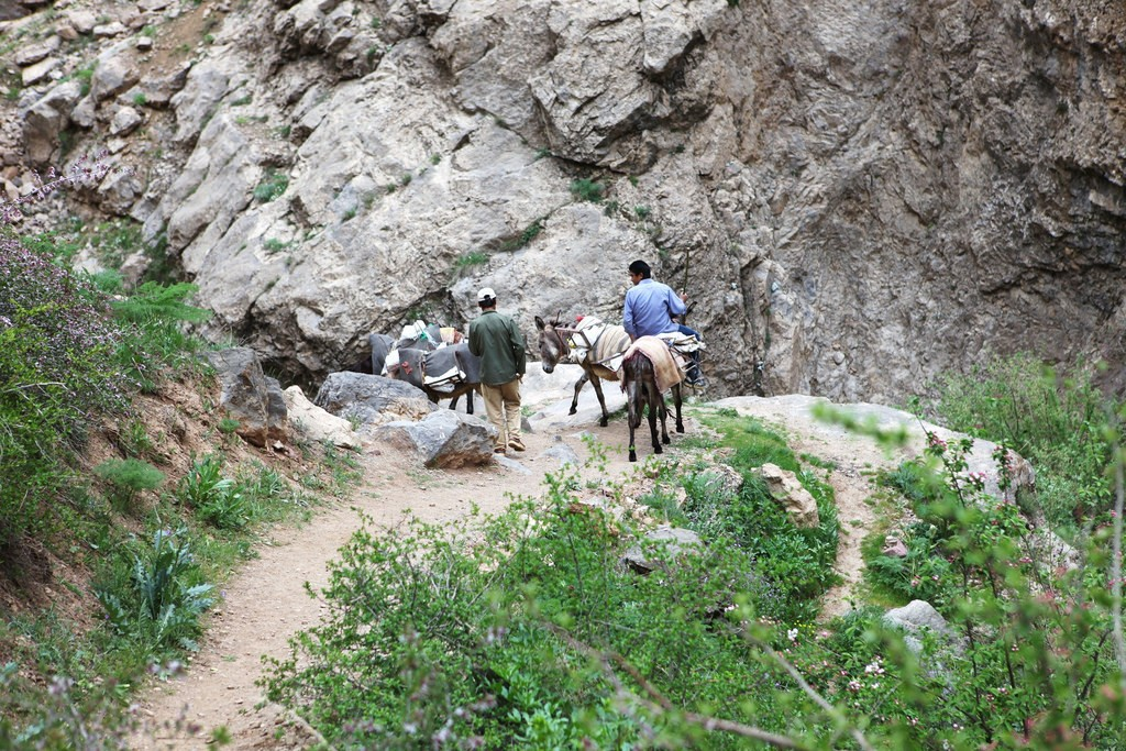 Mules in the Alborz range | © Ninara / Flickr