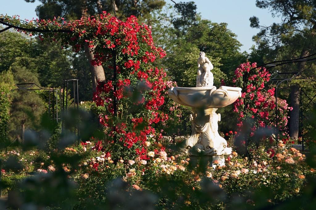 La Rosaleda, the rose garden in the Retiro Park | © Felipe Gabaldón/ Flickr