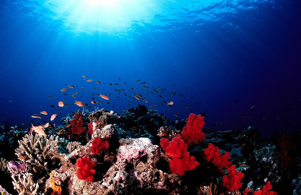 Soft corals of Taveuni, Fiji | © Tony Shih / Flickr