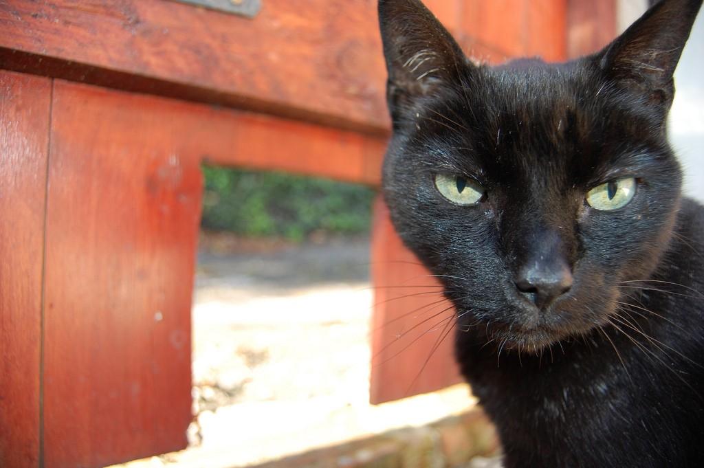 cat, croatian, door
