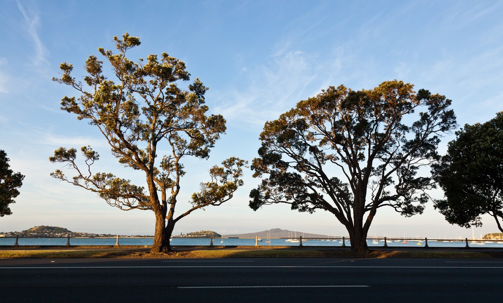 Tamaki Drive, Orakei | © russellstreet/Flickr