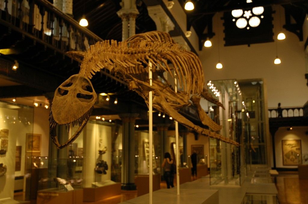 The Hunterian Museum | © Paul Stainthorp/Flickr