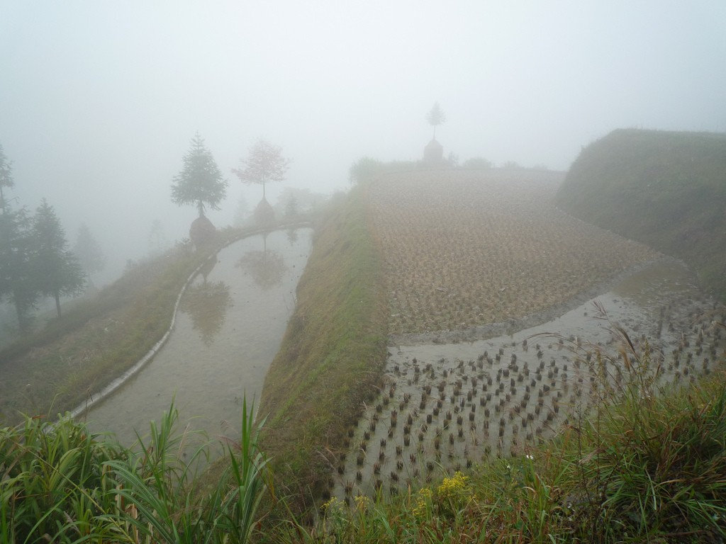 Foggy Terraced Rice Fields|©Thomas Galves/Flickr