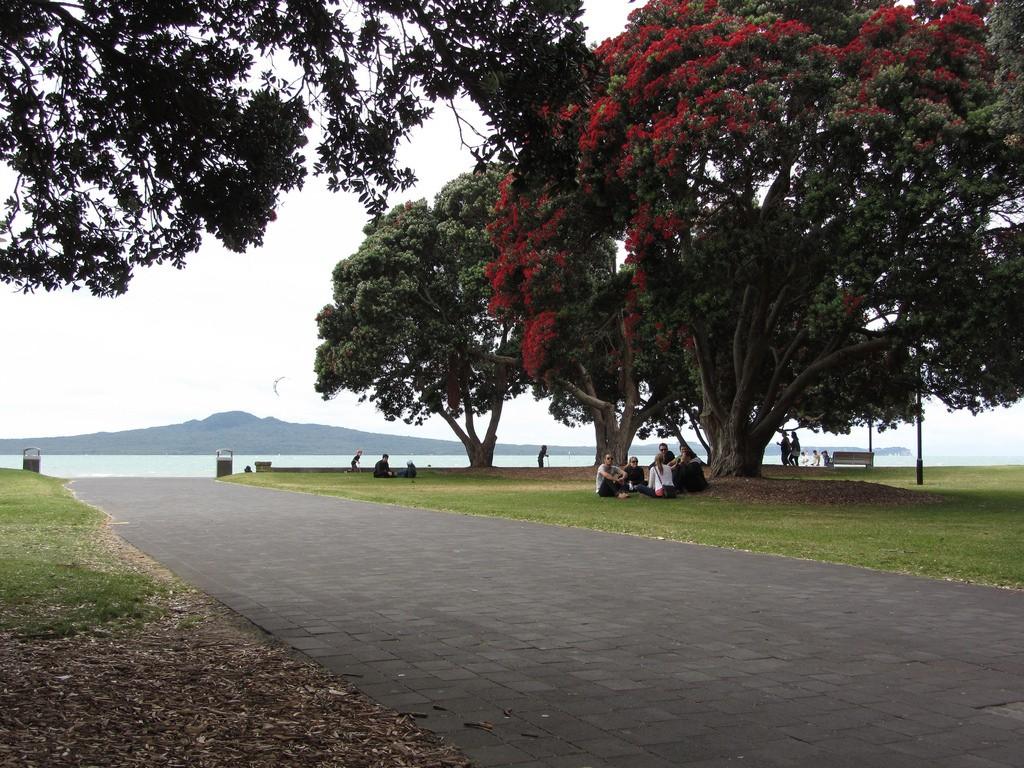 Pōhutukawa at Mission Bay | © Akos Kokai/Flickr