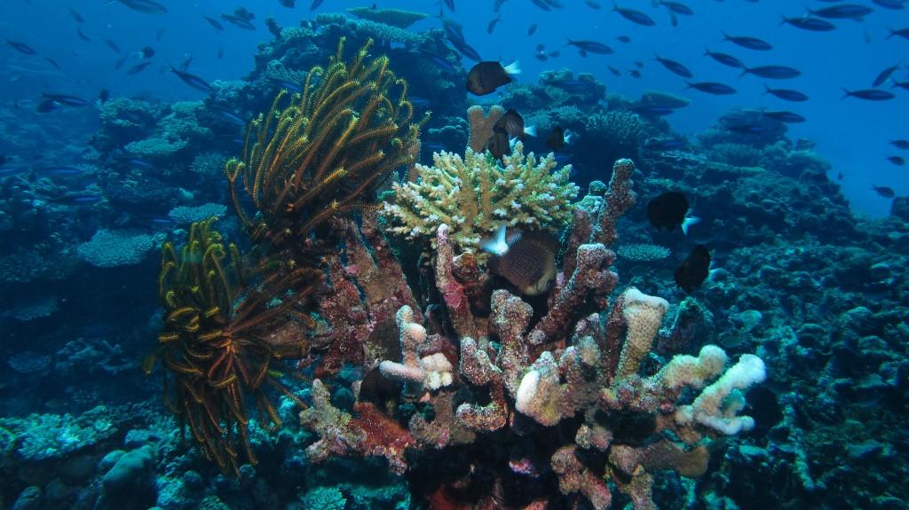 Fiji Coral | © Ed Bierman / Flickr