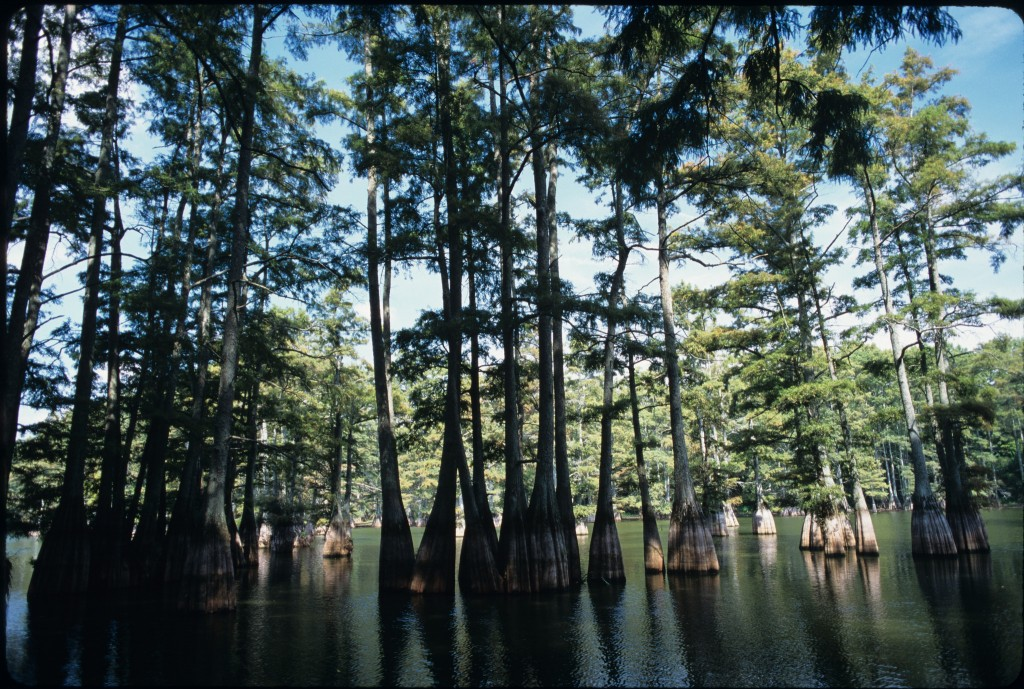 Big Thicket National Preserve © U.S. Department of Agriculture / Flickr