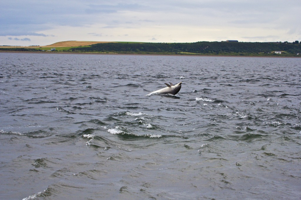 Dolphin in the Moray Firth | © Dan Heap/Flickr