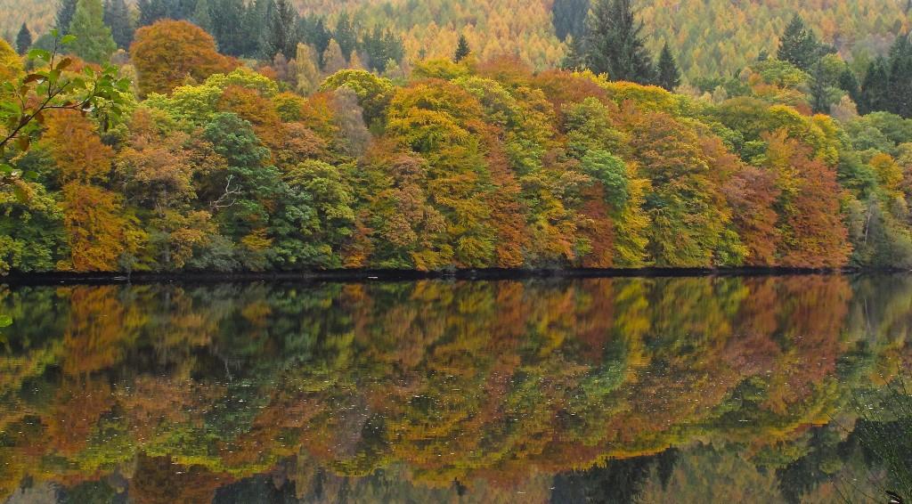 Faskally Woods | © Kenny Murray/Flickr