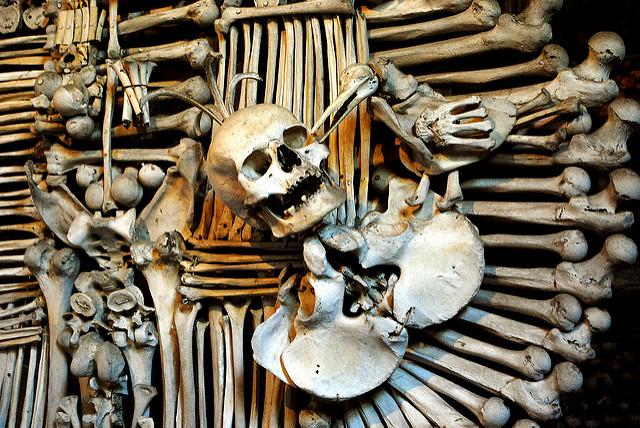 Bones are arranged into works of art / ©Mr. Theklan / Flickr
