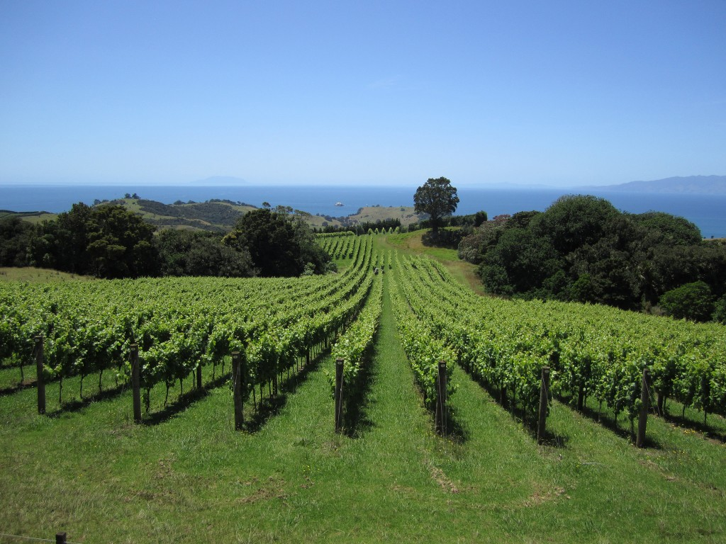 Waiheke Island Vineyards | © portengaround/Flickr