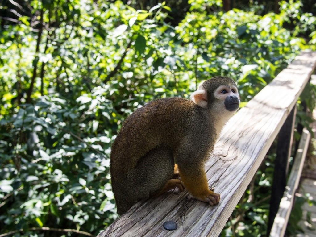 Monkey Jungle | © Bjorn Watland / Flickr