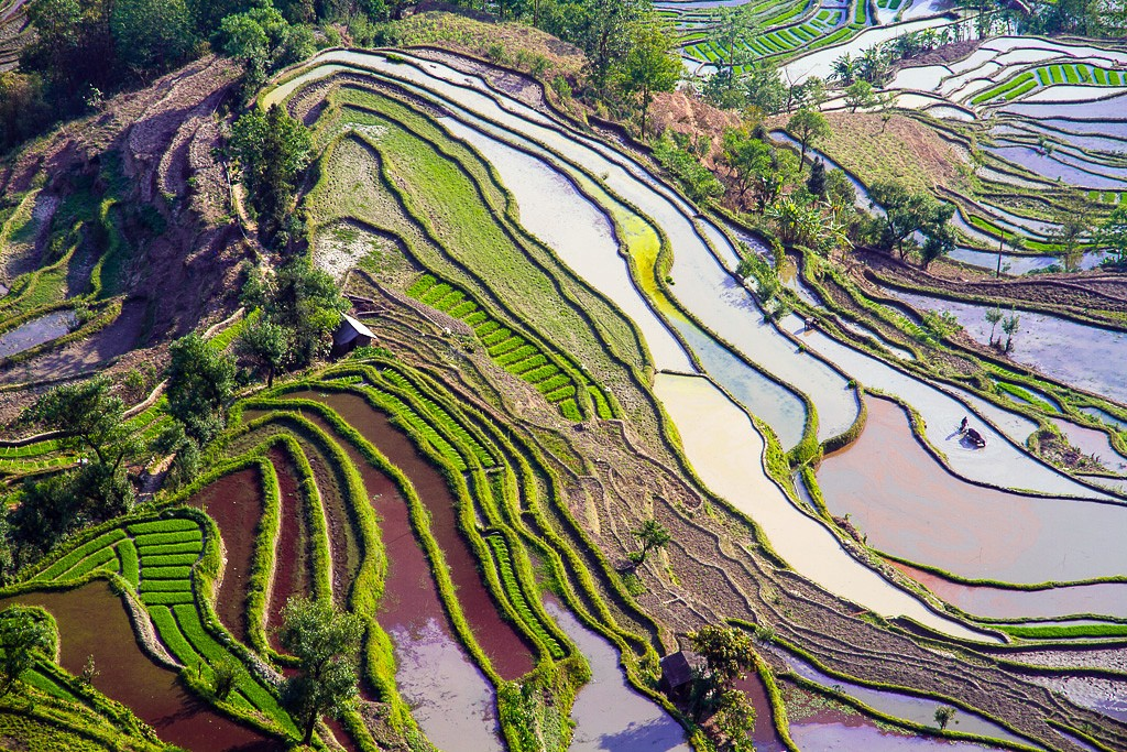 Rice Terraces|©Hoang Giang Hai/Flickr