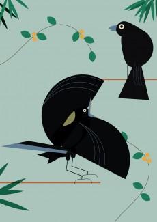 The Victoria's Riflebird | © Michaela Pointon