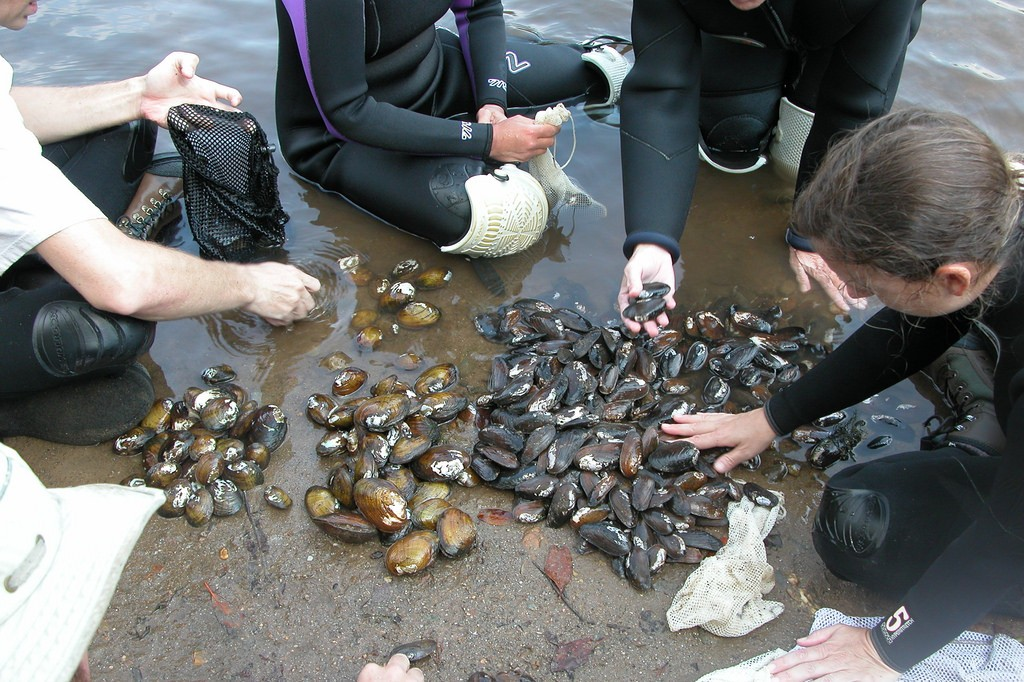 Sorting mussels on the banks of the Little Tennessee River / (c) U.S. Fish and Wildlife Service / Flickr