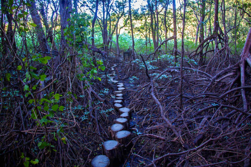 Path to the Nosara Biological Reserve