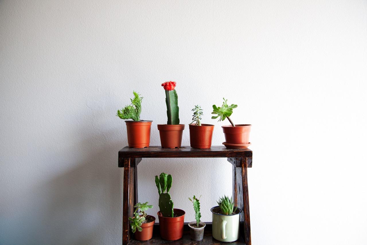 A selection of cacti CC0 Pixabay