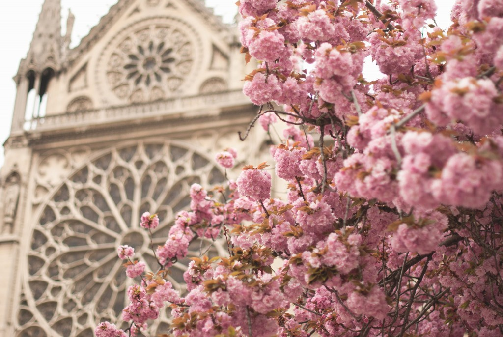 Cherry blossoms at Notre-Dame │© Valerie Hinojosa / Flickr