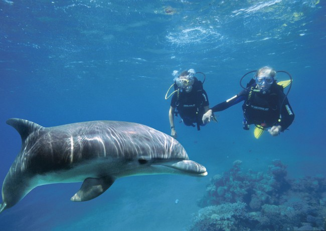 Scuba divers with bottlenose dolphin | ©Israel_photo_gallery / wikimedia https://commons.wikimedia.org/wiki/File:Diving_with_a_dolphin_at_the_Dolphin_Reef_in_Eilat.jpg