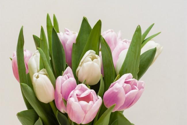 Tulips   © anestiev/pixabay