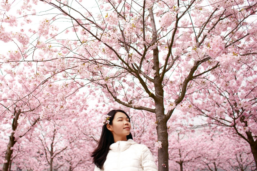 Taking in the beauty of Korean spring | © Tosia Bukowska / GoodFreePhotos