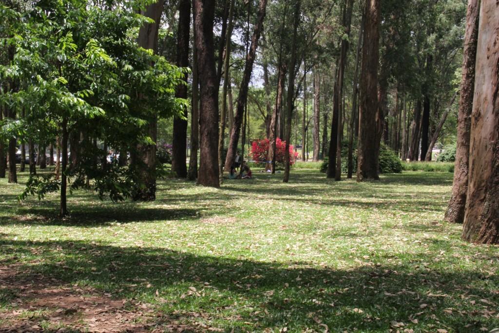 Ibirapuera Park São Paulo © Lesanta/Flickr