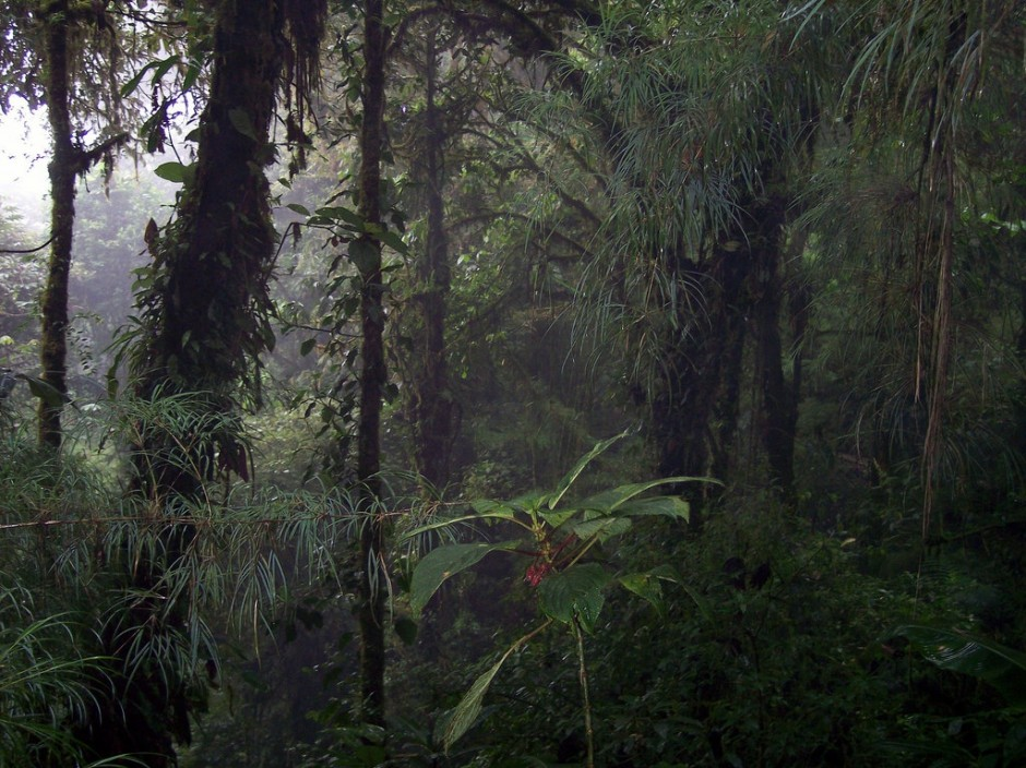 A dense and beautiful cloud forest in Monteverde