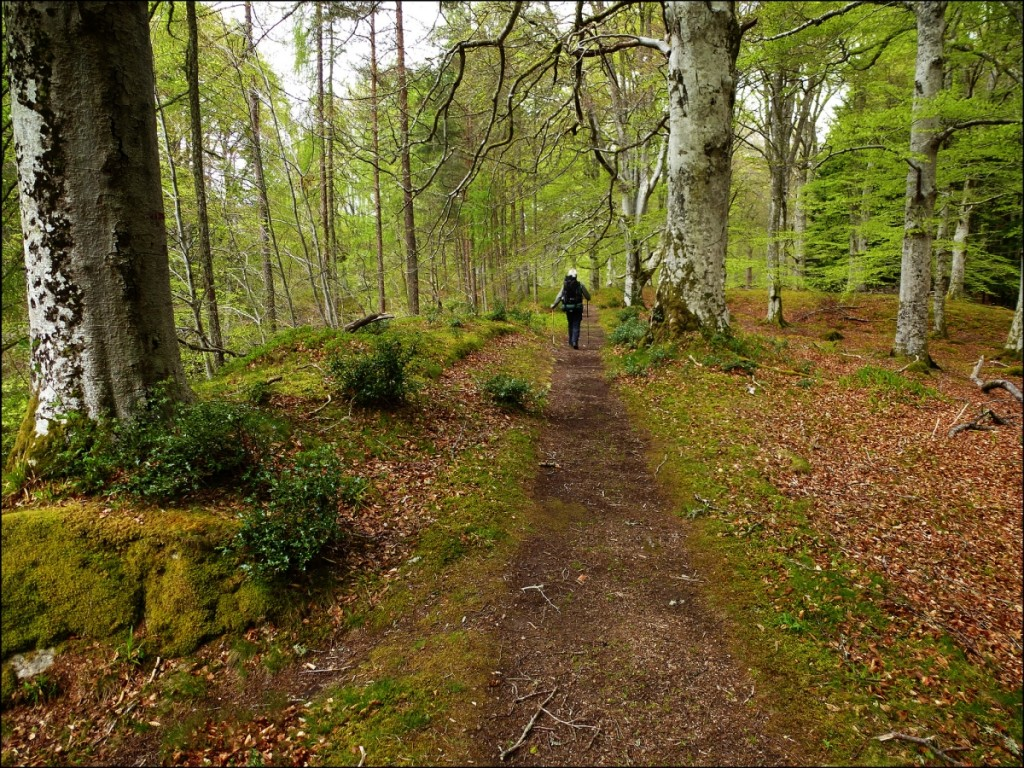 Forest Path Beside the River Nairn | © TedandJen/Flickr