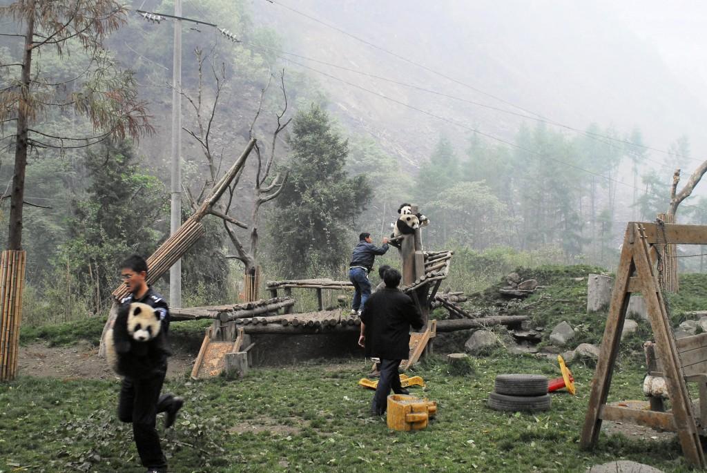 Rescuing cubs | © Panda International