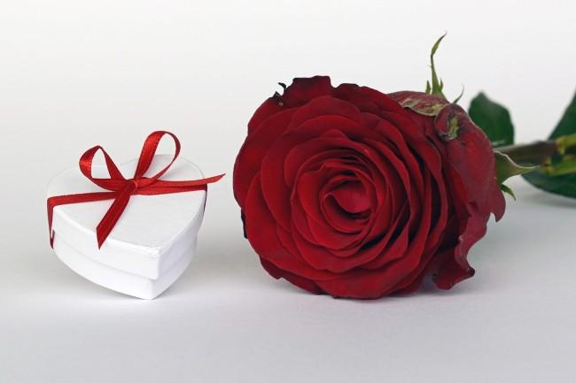 Rose   © annca/pixabay