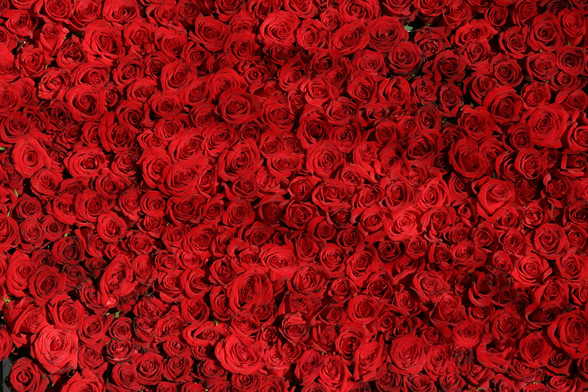 Red roses are always a good option | Pixabay