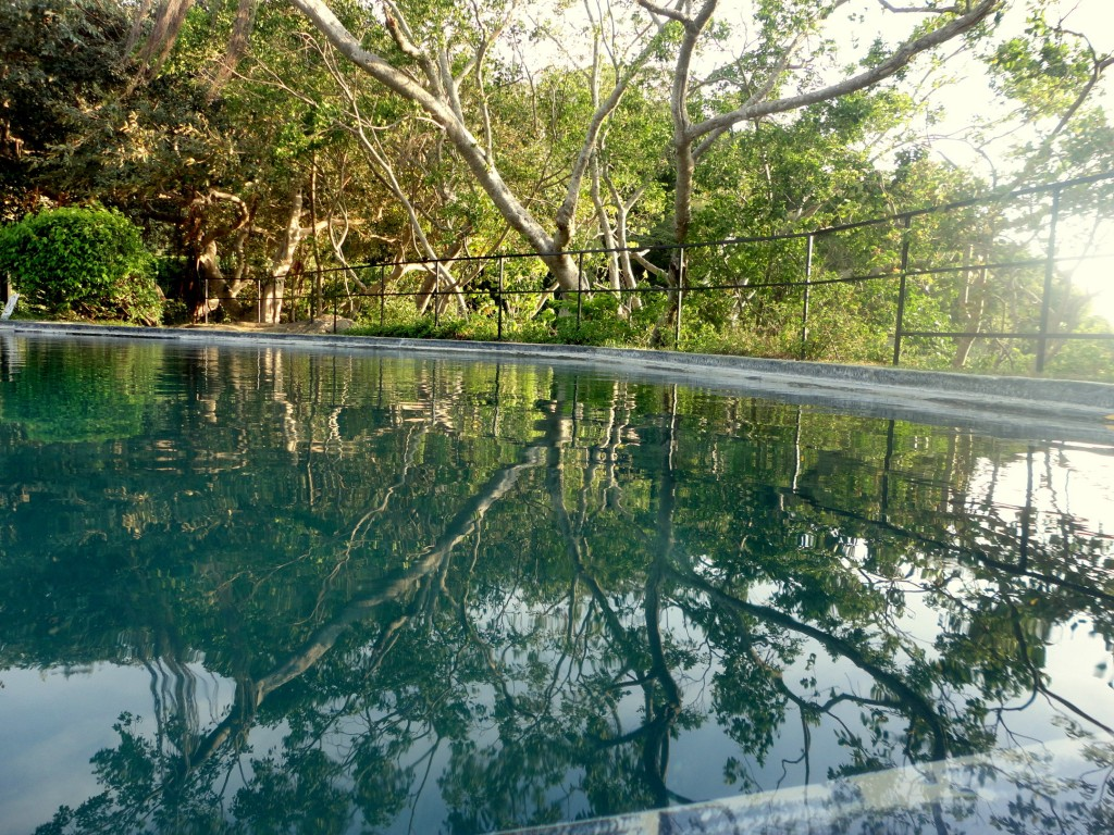 The natural pool at Heritance Kandalama with an amazing view. |© Avindi Perera