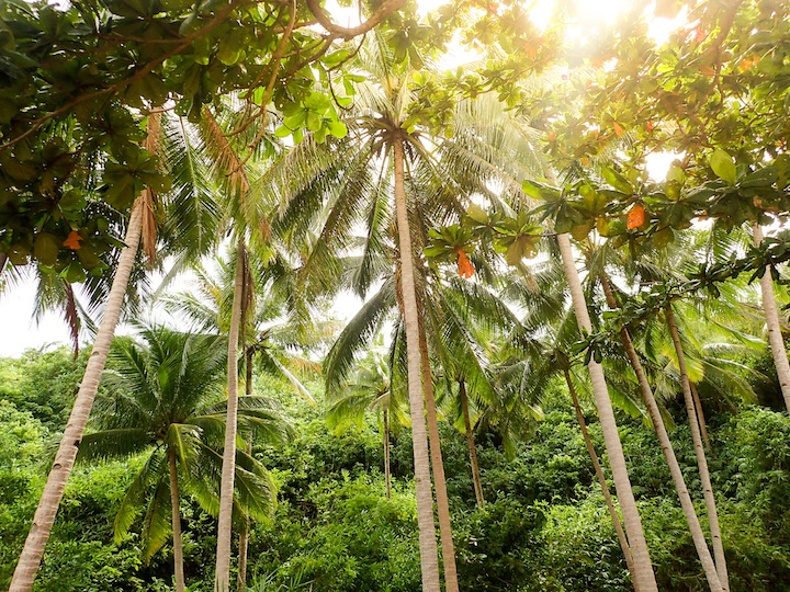 Palm Tree Forest | © Kelsey Madison