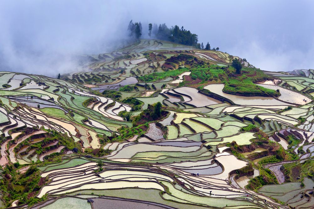 Terraced rice fields in water season|©Zzvet/Shutterstock