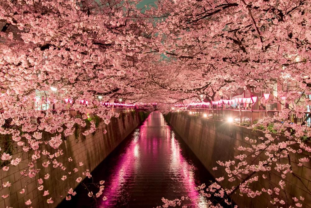 Meguro Canal | © Segawa7 / Shutterstock