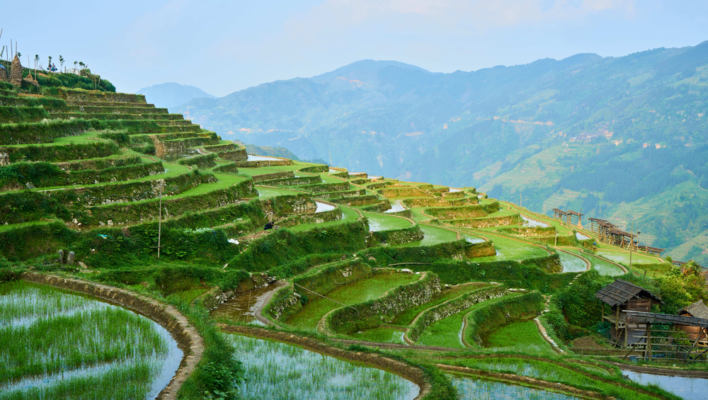 rice terrace, Jiabang, Province of Guizhou, China|©lingling7788/Shutterstock