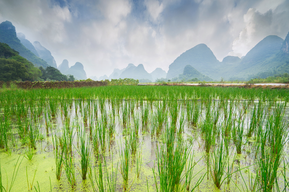 Rice field and mountains|©upslim/Shutterstock