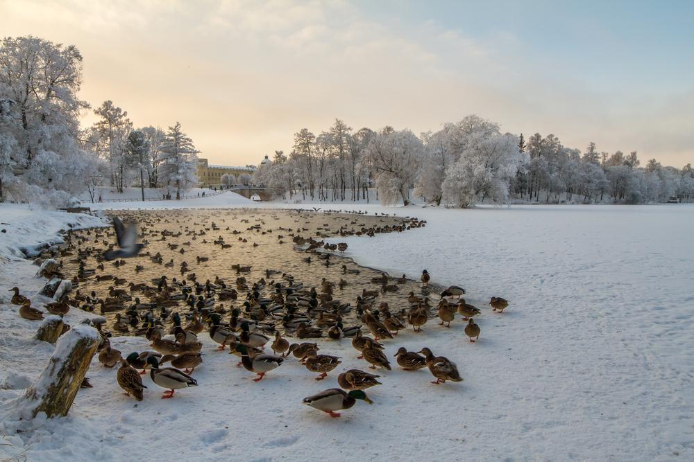 Stadsgraven │© HalizovS/Shutterstock