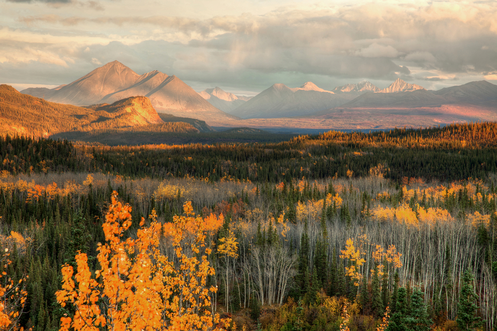 Denali | © Gail Johnson / Shutterstock