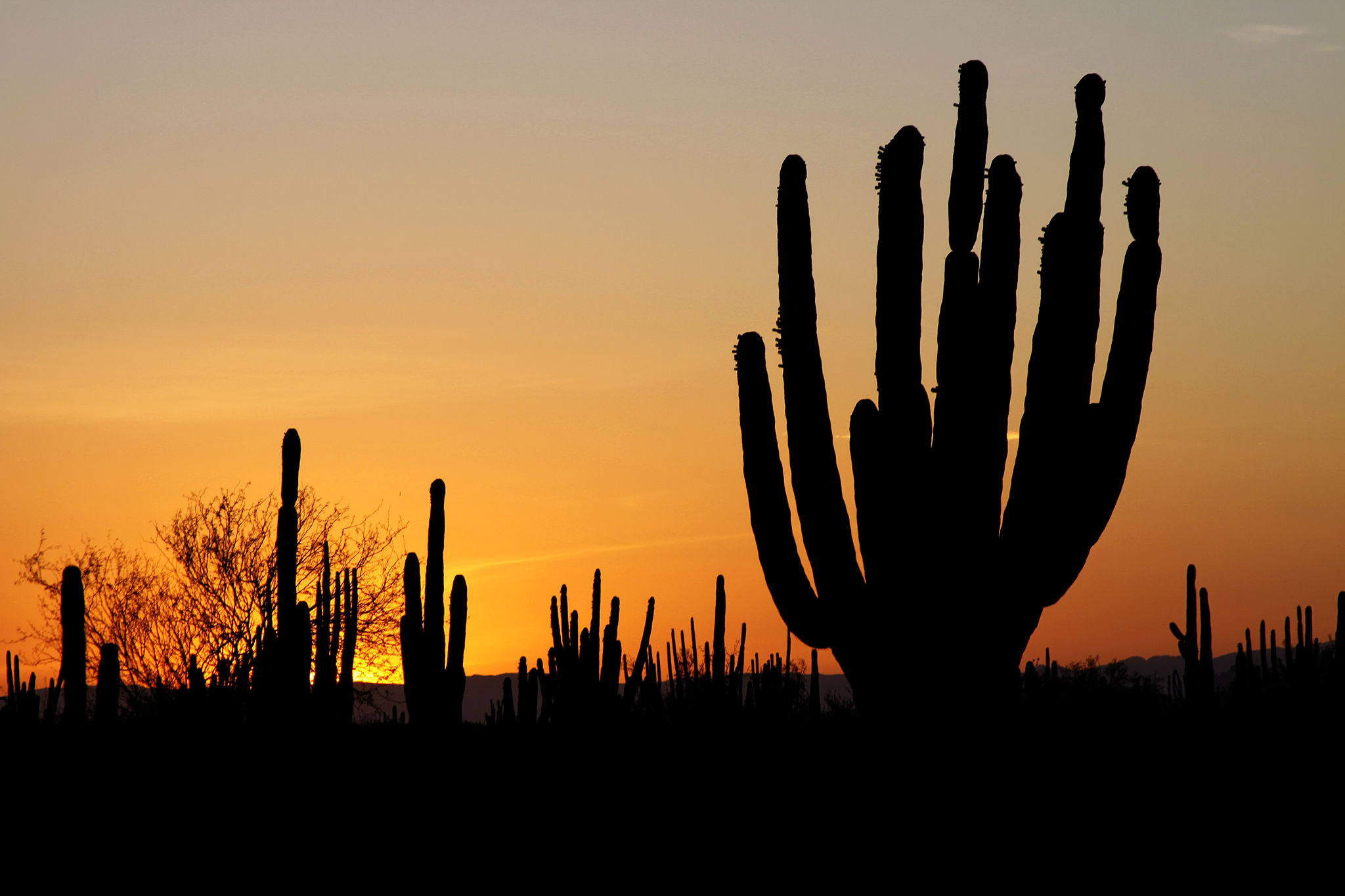 Sonoran desert | © Tomas Castelazo/WikiCommons