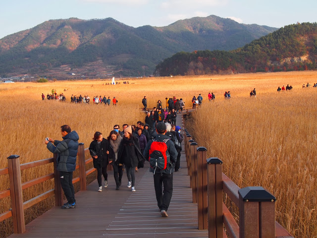 The wetlands of Suncheon Bay | © Mimsie Ladner