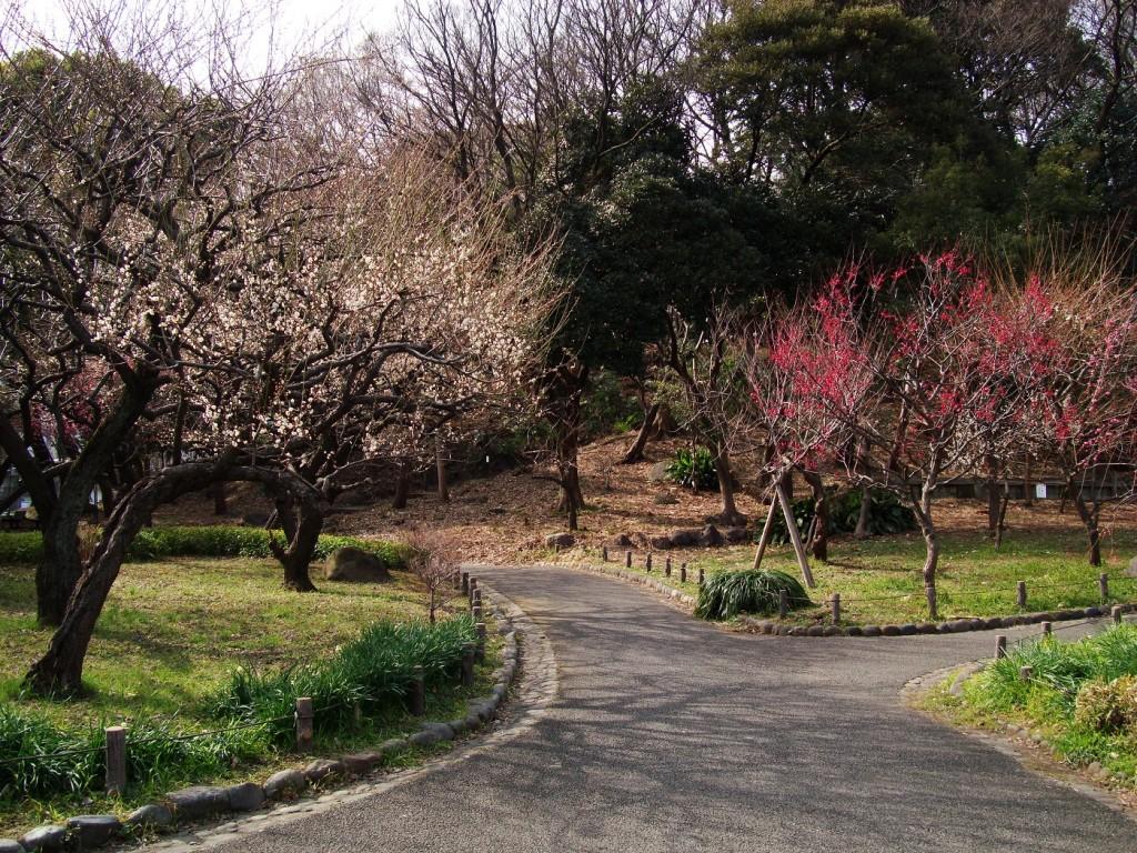 Flowering plum trees of Shiba Park | © MAKIKO OMOKAWA / WikiCommons
