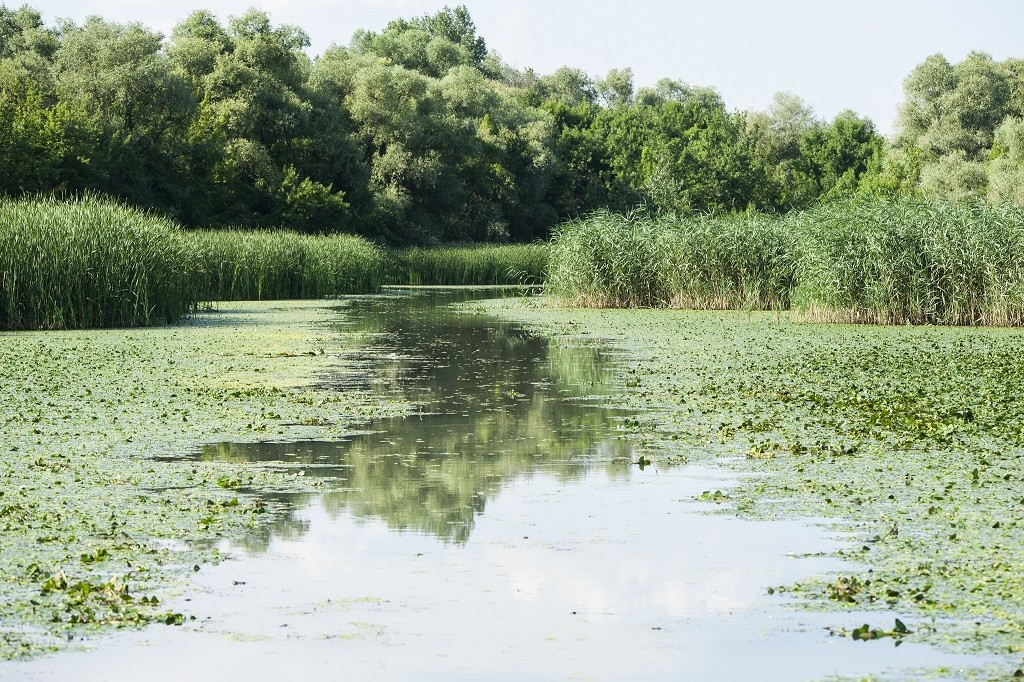 Lake Tisza Hungary