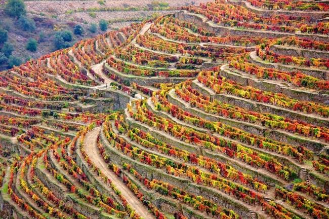 Douro landscape © Pixabay