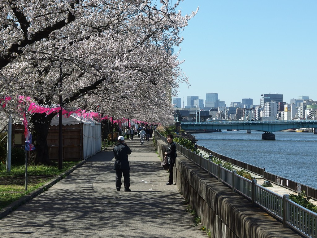 Cherry blossoms along the Sumida River | © Guilhem Vellut/Flickr