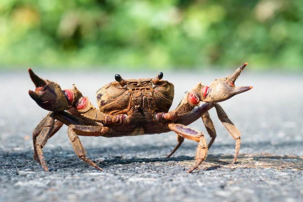 Crab © Rushen/FlickR