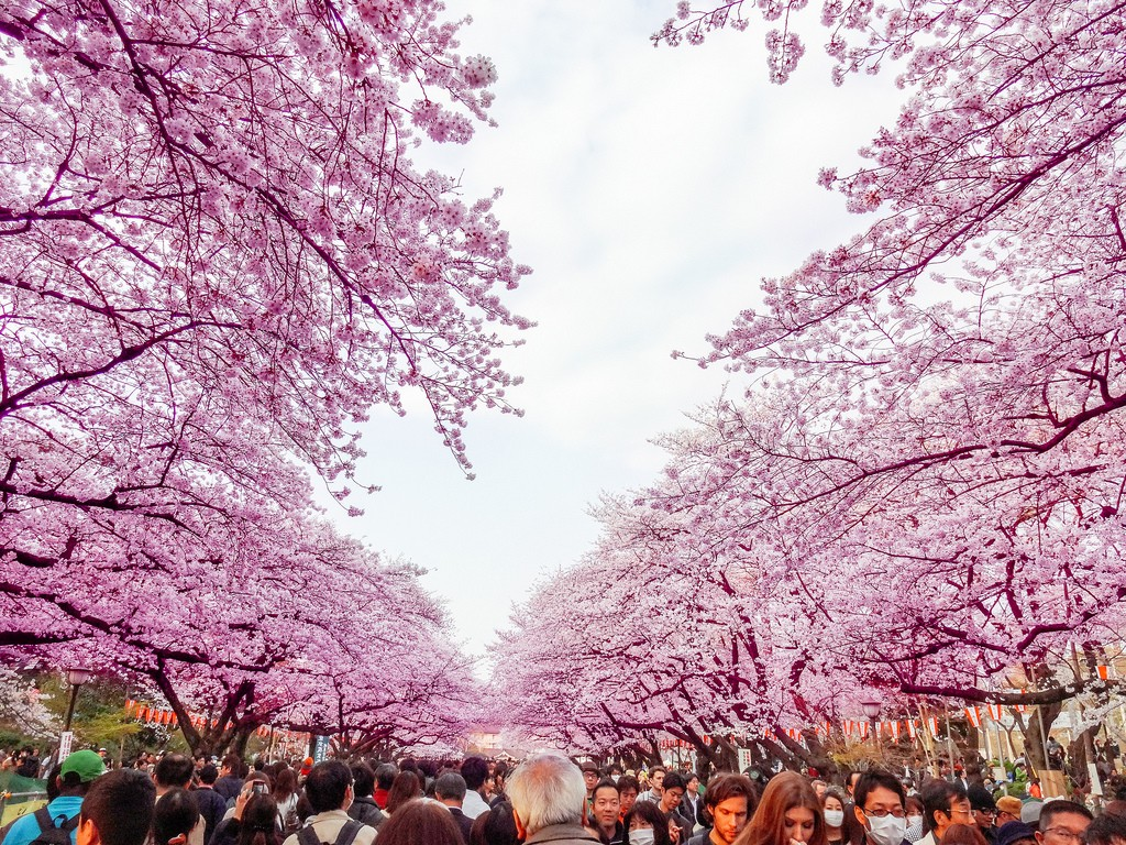 Hanami season in Ueno Park | © Dick Thomas Johnson/Flickr