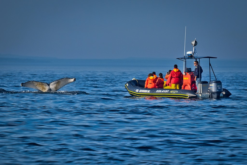 Whale Watching Boat Tour in Tadoussac | © Kayugee / Flickr
