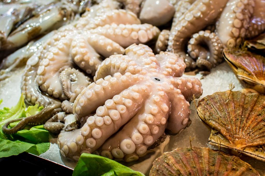 Octopus © Maëlick/FlickR